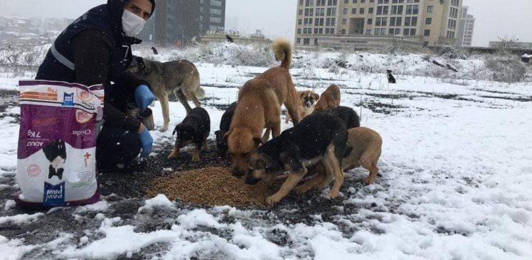 Ataşehir Belediyesi sokak hayvanlarını unutmadı