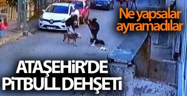 Ataşehir'de dehşet: Pitbull çocuğa saldırdı