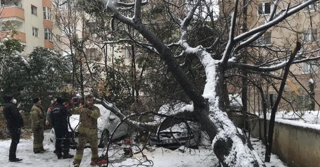 Ataşehir'de 30 yıllık ağaç araçların üzerine devrildi